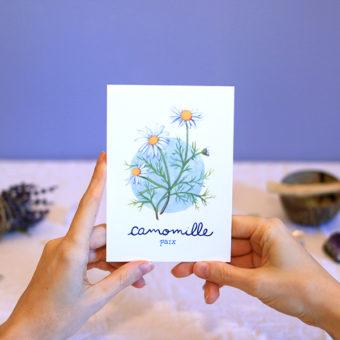 Green Mama Art - Série de cartes Plante Medicinale Camomille